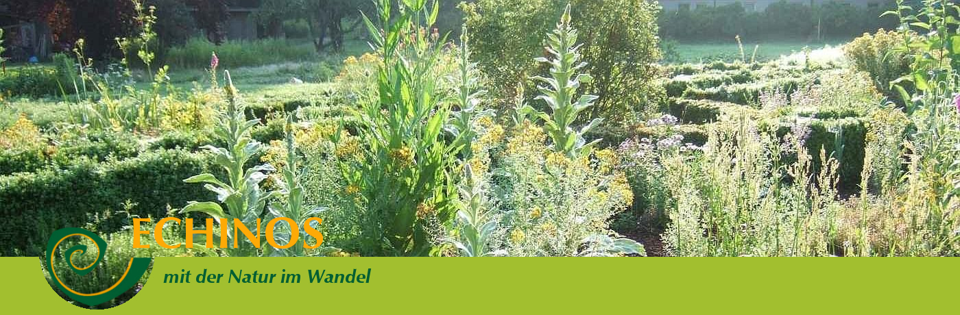 banner kräuter grün 460
